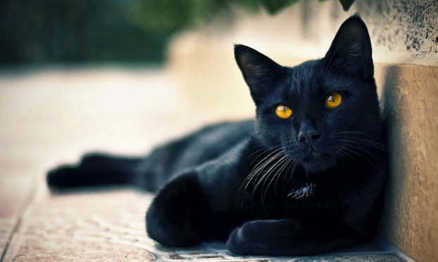 black-cats-awesomelycute.com-14