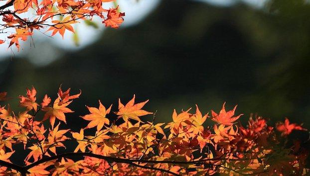 fall-scenery-18766-19245-hd-wallpapers